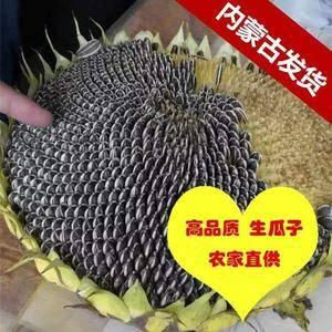 蒙古大粒生瓜子 生瓜子的营养成分要远远高于熟瓜子,而且...