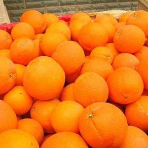 正宗赣南脐橙,因第一年结果,所以产量不多,大概在8千斤左...