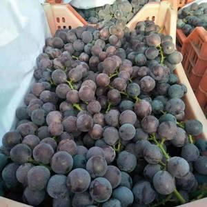 巨峰葡萄大量出售,粒大,串大,口感甜不带酸,需要的联系我...