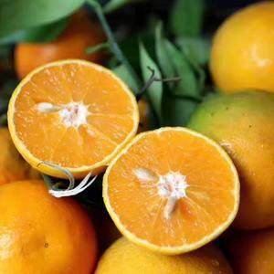 夏橙产地销售中,欢迎新老商家共营,以批发为主,包装运输一...