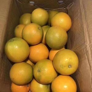 """秭归是著名的""""中国脐橙之乡""""培柑橘历史悠久,早在两千多年..."""