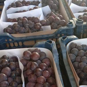 大量巨峰葡萄上市,有需要的老板联系。本产地货源充足,量大...