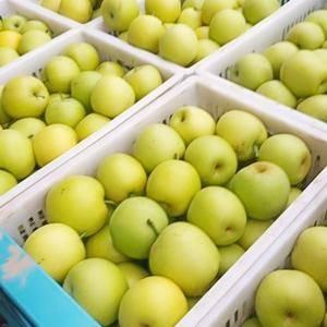 黄冠梨大量上市