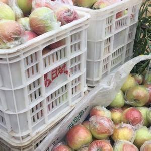 果蔬基地年产百万吨苹果.新红星.红富士.金帅.现嘎啦苹果...