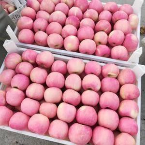 15853904260美八苹果♥金帅苹果♥红星苹果等大量...