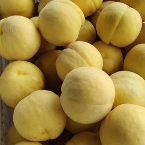 山东优质黄金桃毛桃大量上市了18053993441