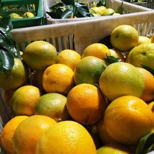 夏橙产地直销大量供应,品质保证价格低廉