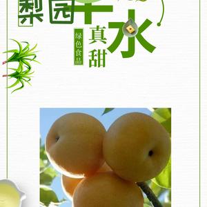 冠县大量供应优质纸袋丰水梨 15165836898