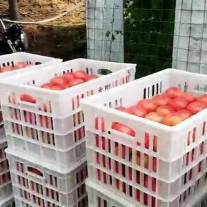 有大量西红柿出售,品种好、质量优,欢迎有意者采购,联系电...