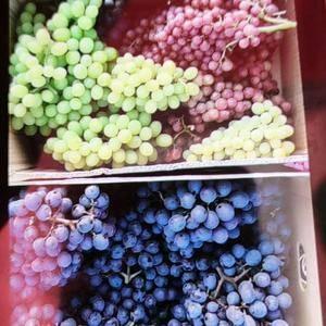早黑宝葡萄  带玫瑰香    自己家种的   应有尽有 ...