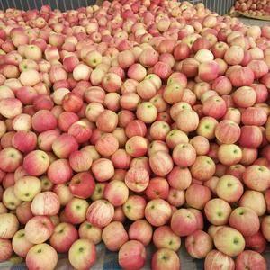 陕西千阳米奇啦苹果,果大汁多,颜色鲜艳,口味极佳