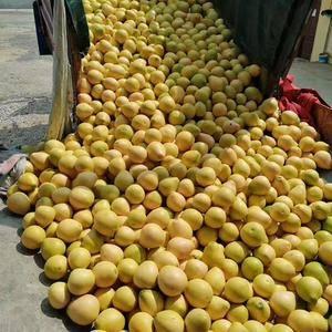 三红密柚,基地批发,预计产量800万斤,价格美丽,欢迎微...