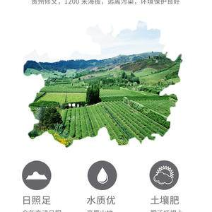 贵州修文猕猴桃,三分酸,七分甜!维C之王!