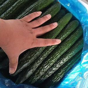 莘县魏庄镇康净庄菜市场,现在大量黄瓜上市,嫁接油亮的,绿...