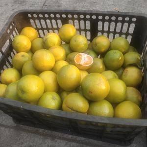 有谁知道榨橙汁的厂子,保定附近的
