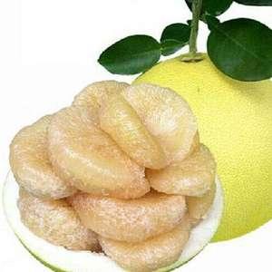 玉环文旦马上可以出售了,又程柚子,预订电话1824868...