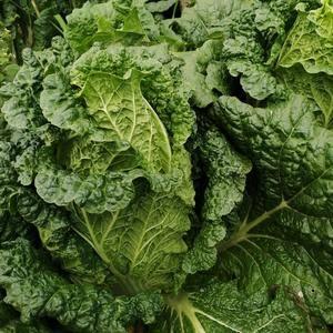 能长期供应优质的白菜和包菜