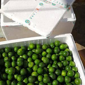 越南青柠檬昆明直接发货到全国各地不包含运费!