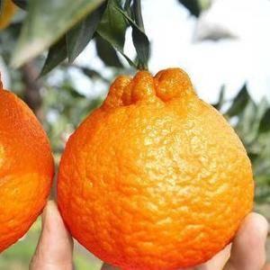 丑八怪中含有多种物货叫做柠檬酸,柠檬酸这种物质是人体内糖...