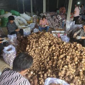 供应产地新鲜芋头上市了13173448088山东芋头大量...