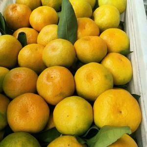 湖北蜜橘产地鲜果供应,个大皮薄,肉细味甜,电话15090...