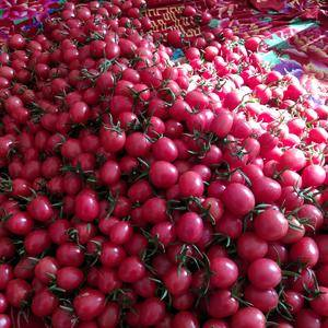 我们聊城莘县圣女果己上市品种有千喜贝贝等品种质量好货源充...