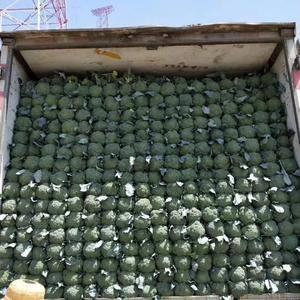 河北,邯郸联邦蔬菜物流园,现有大量新鲜蔬菜上市,西兰花等...