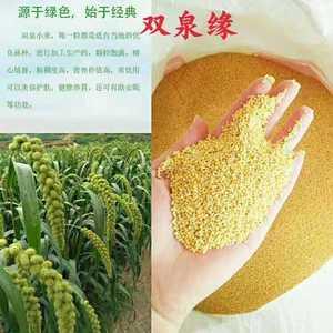 大山里面的绿色,双泉缘小米,喝出浓浓米味香,喝出健康。