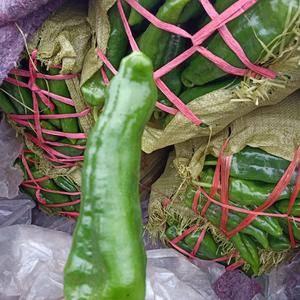 大棚辣椒现已大量上市,辣椒品种多、质量好,各种包装都有,...