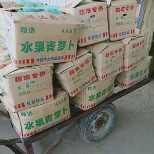 13031707440山东济南平阴肥城里外青萝卜,水果萝...