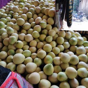 高品质红心蜜柚出售,数量100万斤,联系电话159113...