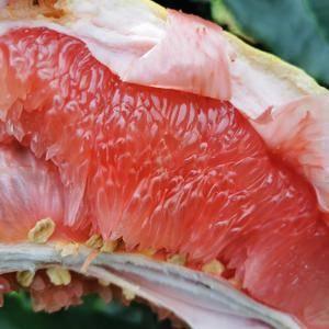 自家百亩红心蜜柚出售,数量100万斤,联系电话15911...