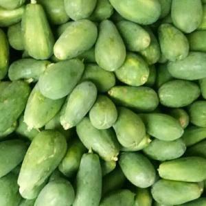 原产地水果木瓜,价格实在,基本常年供应,有需求请联系……