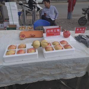 河南省洛阳市嵩县陆浑鼎有机绿色软籽石榴。销售电话1859...