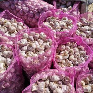 甘肃省宏运农产品专业合作社,大蒜大量上市,质量上乘。联系...