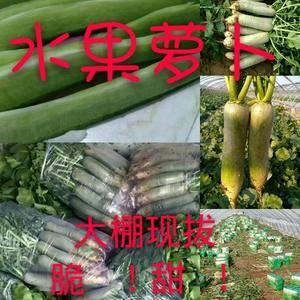 潍县萝卜大量有货,需要的老板联系我15966123808