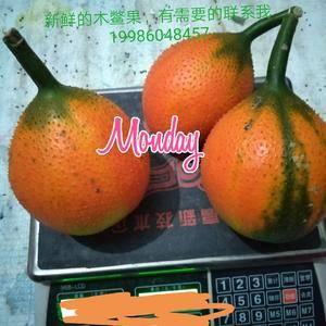 有新鲜水果,木鳖果成熟了,有需要的联系我13687851...