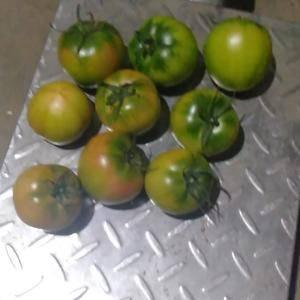 各种柿子批发