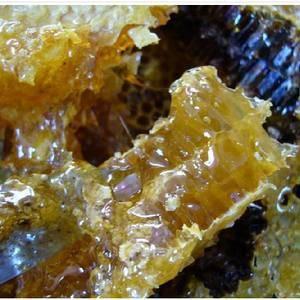 野生蜂蜜300元一斤