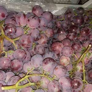 红提葡萄,老百姓存的货和收的货