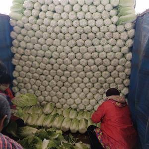 大量公应北京三号大白菜