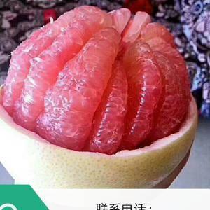 本处大量出售湖北宜昌蜜柚,红心白心都有,都是鲜货、现采...
