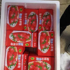 大凉山冬季草莓11月上市 ,这里有质量最好的草莓