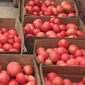 红河西红柿大量上市,1000公斤起批,小果1.7每公斤,...