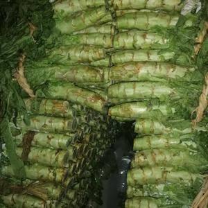 长沙红尖叶莴笋今日1.1元/斤,