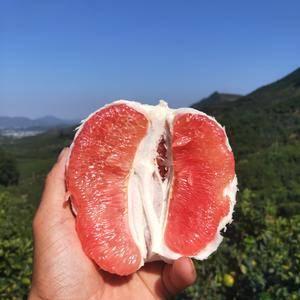 大量出售平和县琯溪蜜柚,价格便宜,一斤一元,口感好,质量...