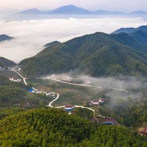 2020年新茶已上市,自产自销高山绿茶,霍山黄芽,产自大...