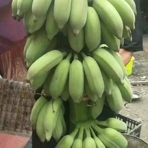 本人卖西项蕉,现砍现发货,大量发货,欢迎订购。