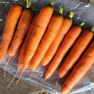 我基地大量胡萝卜上市中,有需要的老板请联系我电话1594...