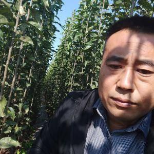 大量一公分以上秋月移栽根梨苗出售20万棵 价格一定叫你...